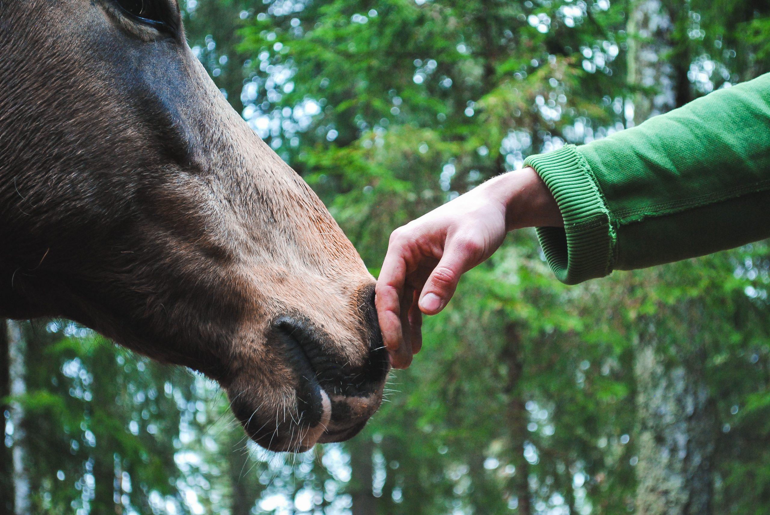 bien-être animal association l'étape